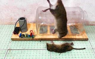 Как сделать электрическую ловушку для мышей и крыс