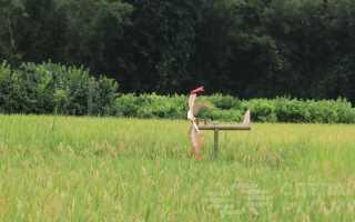 Механический отпугиватель птиц на дачу своими руками