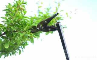 Приспособление для обрезки веток из садовых ножниц