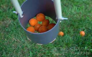 Приспособа для сбора упавших на землю абрикосов