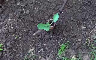 Приспособа для высадки рассады капусты в грунт