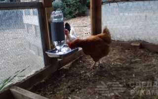 Как сделать автоматическую поилку для домашних птиц