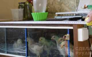 Как сделать брудер для цыплят своими руками